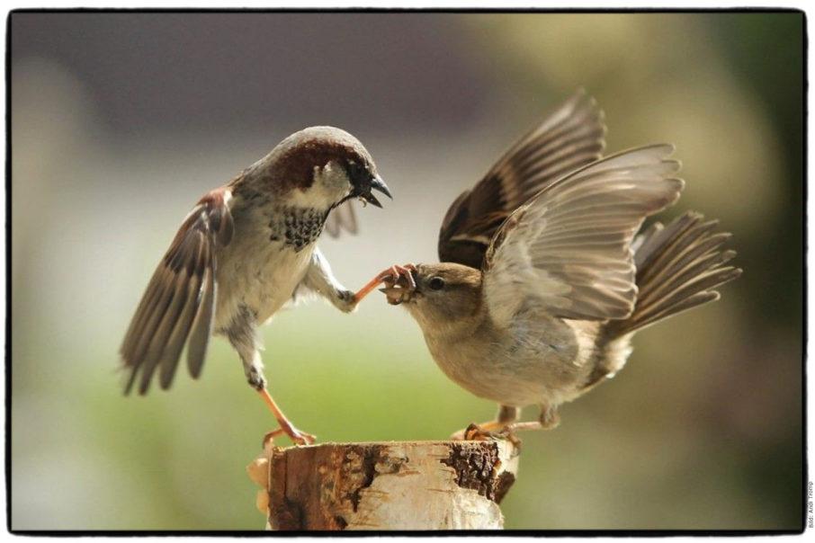 Birdland_1