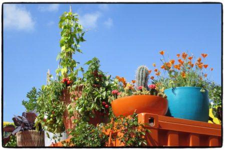 Paradiesgarten_Chelsea1
